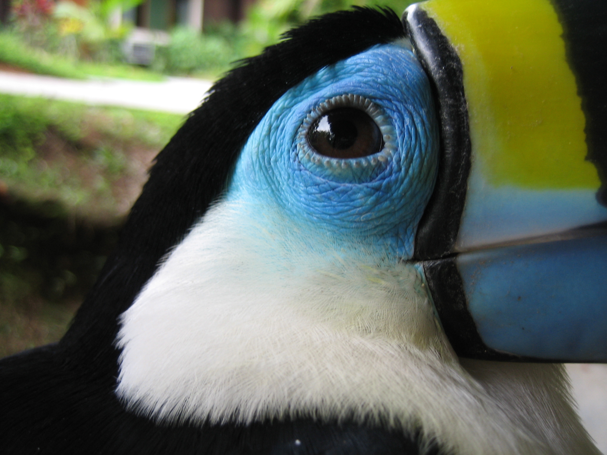 Photo of Toucan