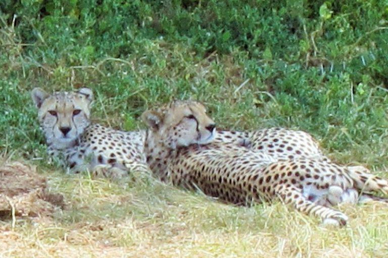 Africa, Kenya, Amboseli-10