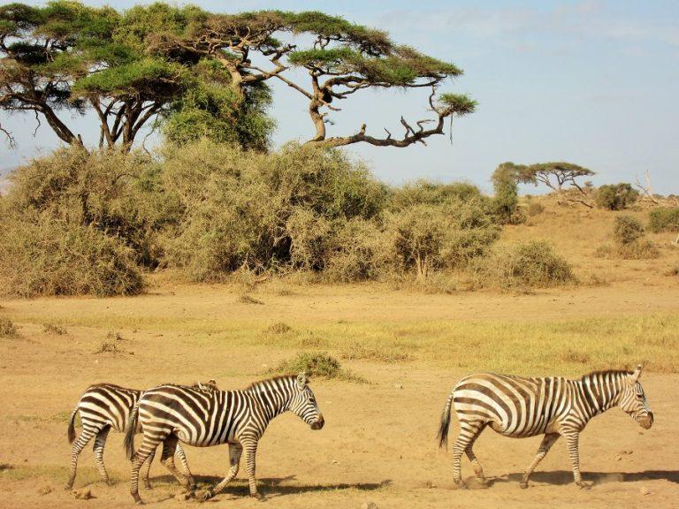 Africa, Kenya, Amboseli-7