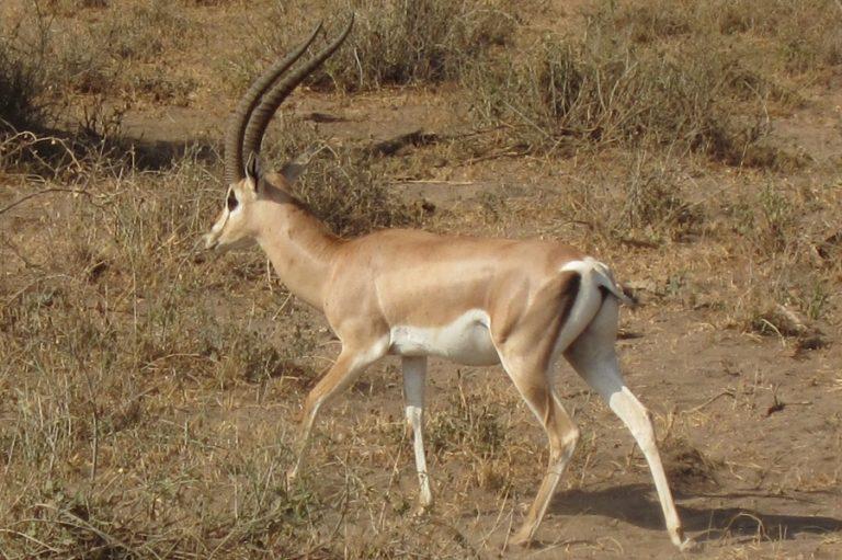 Africa, Kenya, Amboseli-8