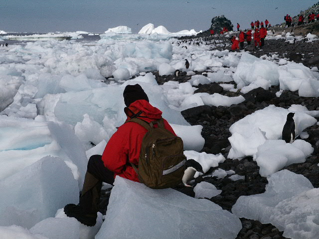 man sitting on ice watching penguins in Antarctica