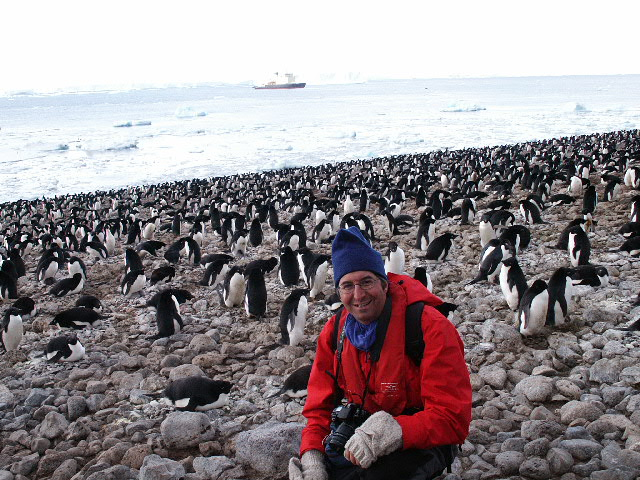 Man in middle of penguin colony