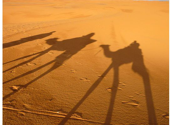 Morocco, camel shaddows