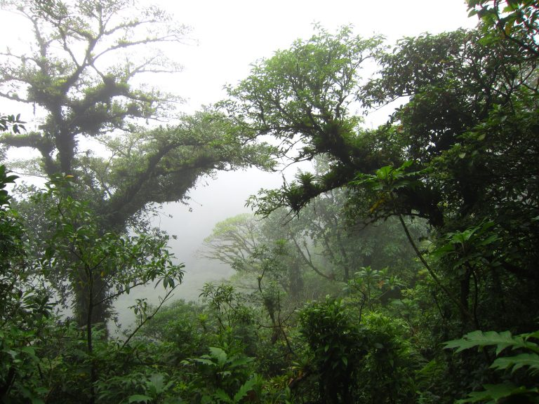 Nicaragua jungle and forest