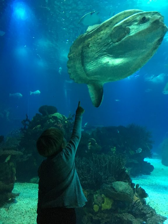 Boy pointing at Mola Mola fish