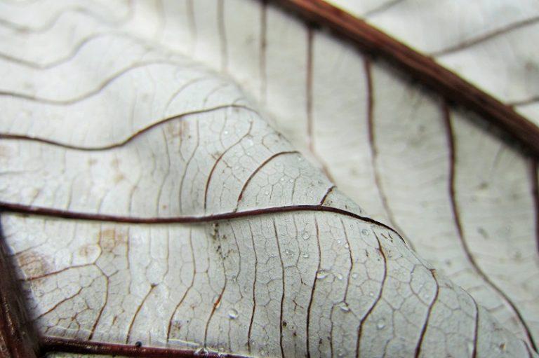 El Yunque Closeup