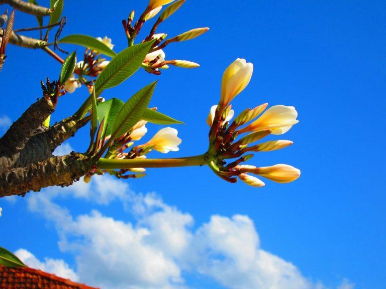 Zanzibar, Tanzania -flower